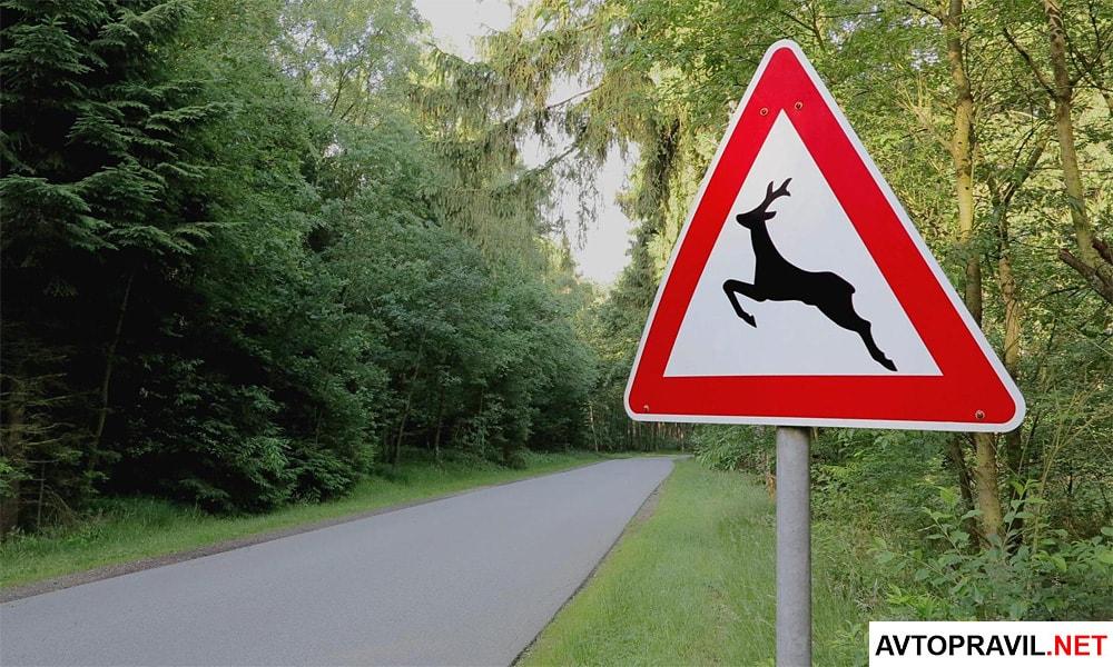 Знак осторожно дикие животные